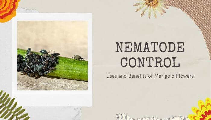 Nematode Control
