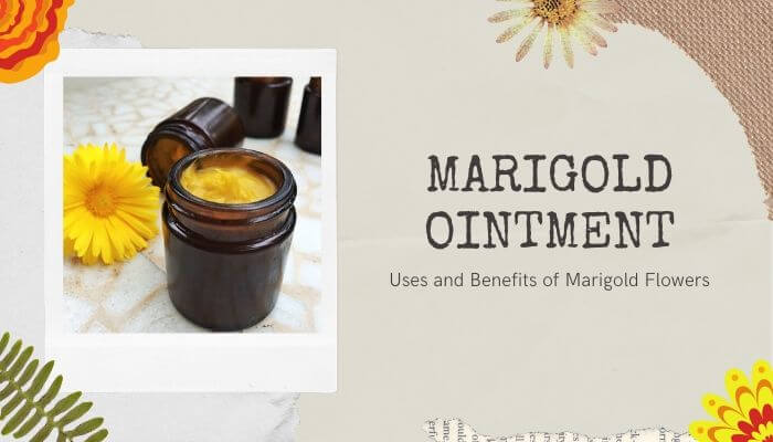 Marigold Ointment Cream